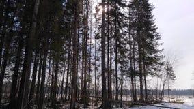 Groen de lentebos in zonstralen Stock Foto's