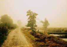 Groen in de mist Royalty-vrije Stock Afbeelding