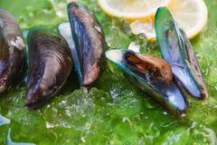 Groen de Mossel vers oceaan gastronomisch diner van schaaldierenzeevruchten met citroen en ijs stock afbeelding