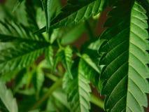Groen is de nieuwe zwarte! Stock Foto
