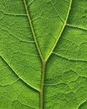 Groen de textuurpatroon van de bladcel Stock Foto's