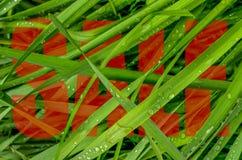Groen de Verkoopontwerp van de Graslente royalty-vrije stock foto's