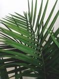 Groen decor stock afbeeldingen