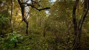 Groen dicht bos in de zomer stock fotografie