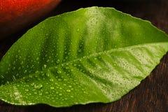Groen die blad met dalingen van dauw op houten achtergrond wordt behandeld Stock Foto