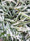 Groen die gras door de eerste vorst wordt beïnvloed royalty-vrije stock afbeelding