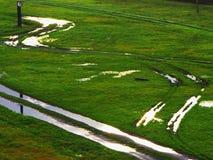 Groen die gras door de zon met kalium wordt aangestoken Royalty-vrije Stock Foto's