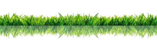 Groen die gras met bezinning op witte achtergrond wordt geïsoleerd Royalty-vrije Stock Fotografie