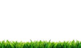 Groen die gras met bezinning op witte achtergrond wordt geïsoleerd Royalty-vrije Stock Afbeeldingen