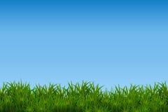 Groen die gras op blauwe hemelachtergrond wordt geïsoleerd Royalty-vrije Stock Foto