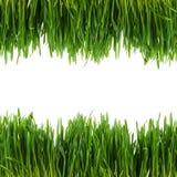 Groen die gras op witte achtergrond wordt geïsoleerd Royalty-vrije Stock Fotografie