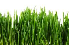 Groen die gras op witte achtergrond wordt geïsoleerd Stock Fotografie