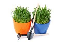 Groen die gras in pot op witte achtergrond wordt geïsoleerd Stock Afbeeldingen