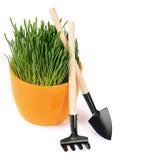 Groen die gras in pot op witte achtergrond wordt geïsoleerd Royalty-vrije Stock Fotografie