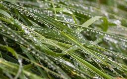 Groen die gras in regendruppels wordt behandeld stock foto's