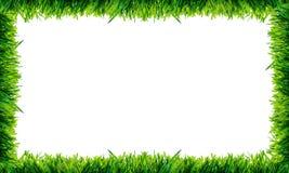 groen die graskader op witte achtergrond wordt geïsoleerd Royalty-vrije Stock Foto