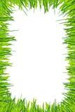 groen die graskader op witte achtergrond wordt geïsoleerd Royalty-vrije Stock Foto's