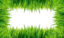 groen die graskader op witte achtergrond wordt geïsoleerd Stock Foto
