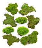 Groen die mos op witte bakground wordt geïsoleerd royalty-vrije stock foto's