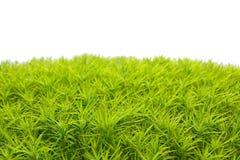 Groen die mos op witte bakground wordt geïsoleerd stock afbeeldingen
