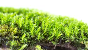 Groen die mos op witte dichte omhooggaand wordt geïsoleerd als achtergrond stock afbeelding