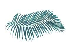Groen die palmblad op witte achtergrond met het knippen van weg wordt geïsoleerd royalty-vrije stock afbeeldingen