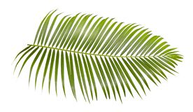 Groen die palmblad op witte achtergrond met het knippen van weg wordt geïsoleerd stock foto