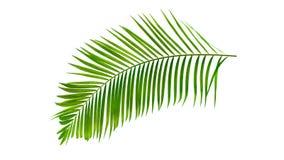 Groen die palmblad op witte achtergrond met het knippen van weg wordt geïsoleerd royalty-vrije stock fotografie