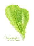 Groen die saladeblad op een witte achtergrond wordt geïsoleerd Royalty-vrije Stock Foto's