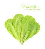 Groen die saladeblad op een witte achtergrond wordt geïsoleerd Stock Foto's