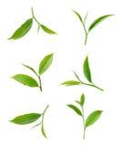 Groen die theeblad op witte achtergrond wordt geïsoleerd Stock Foto