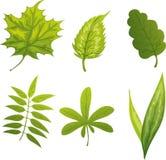 Groen doorbladert vector illustratie