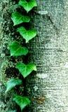 Groen doorbladert Stock Foto