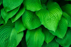 Groen doorbladert Royalty-vrije Stock Foto