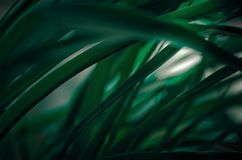 Groen doorbladert in diagonale arrangementeclose-up Stock Fotografie