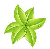 Groen doorbladert en daalt Royalty-vrije Stock Afbeelding