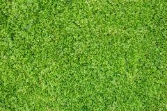 Groen doorbladert textuur Stock Foto's