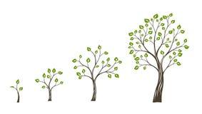 Groen ecoconcept van de boomgroei De cyclus van het boomleven vector illustratie