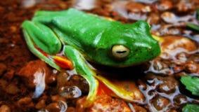 Groen een close-up royalty-vrije stock foto