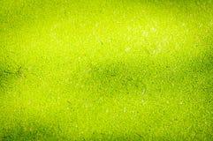 Groen eendekroos op water in het meer royalty-vrije stock foto