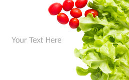 Groen Eiken Blad en Cherry Tomatoes Stock Afbeeldingen