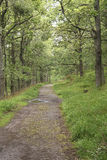 Groen en beautfiul bos royalty-vrije stock foto