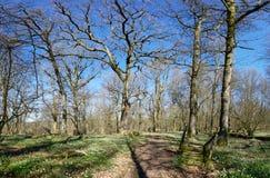 Groen en Bloem Rich Oak Forest Royalty-vrije Stock Afbeeldingen