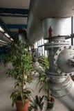 Groen en bloemen in bedrijven stock afbeelding