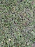 Groen en droog gras Boom op gebied Mening van hierboven Stock Foto