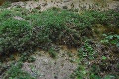 Groen en gedetailleerd mos en korstmos op de holmuur stock fotografie