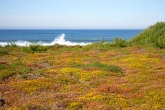 Groen en geel mos en gras op de kust van de de kustzomer van de Atlantische Oceaan met het bespatten van golven op horizon royalty-vrije stock afbeeldingen