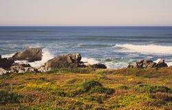 Groen en geel mos en gras in stenen op de kust van de de kustzomer van de Atlantische Oceaan met rotsen en stenen Toneelzeegezich stock foto
