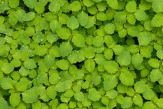 Groen en Schoon Royalty-vrije Stock Afbeelding