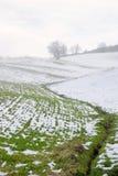 Groen en sneeuw Stock Afbeelding